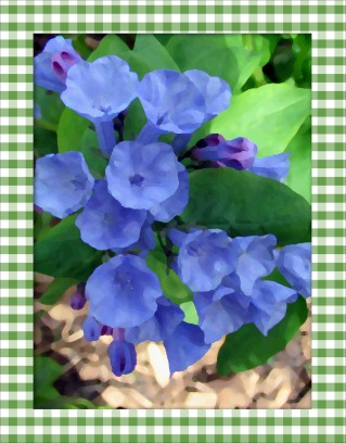 Altered - bluebells